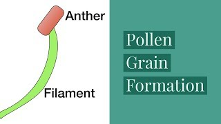 Pollen Grain Formation-Sexual Reproduction In Plants-Video 2