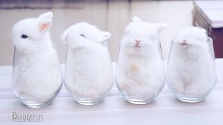 Baby Bunnies In Cups
