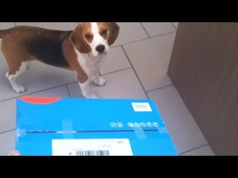How To Entertain you Dog During LOCKDOWN : Funny Beagle Louie