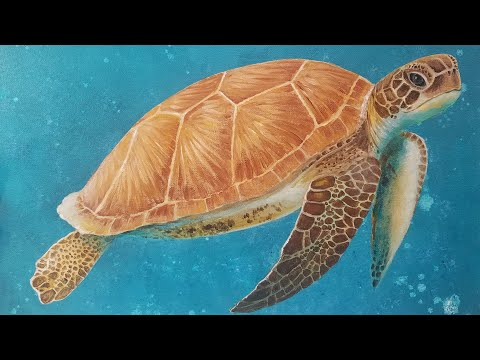 Sea Turtle Realistic Acrylic Painting Tutorial Ocean Nautical Step by Step Lesson