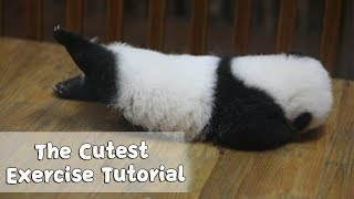 This Has To Be The Most Adorable Fitness Tutorial Ever | iPanda