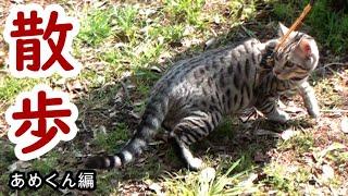 今回は子猫のあめ初めてのお散歩になります(^▽^)/ お散歩は出来たのでしょうか・・・。 いつもご視聴ありがとうございます(^▽^) 初めましての...