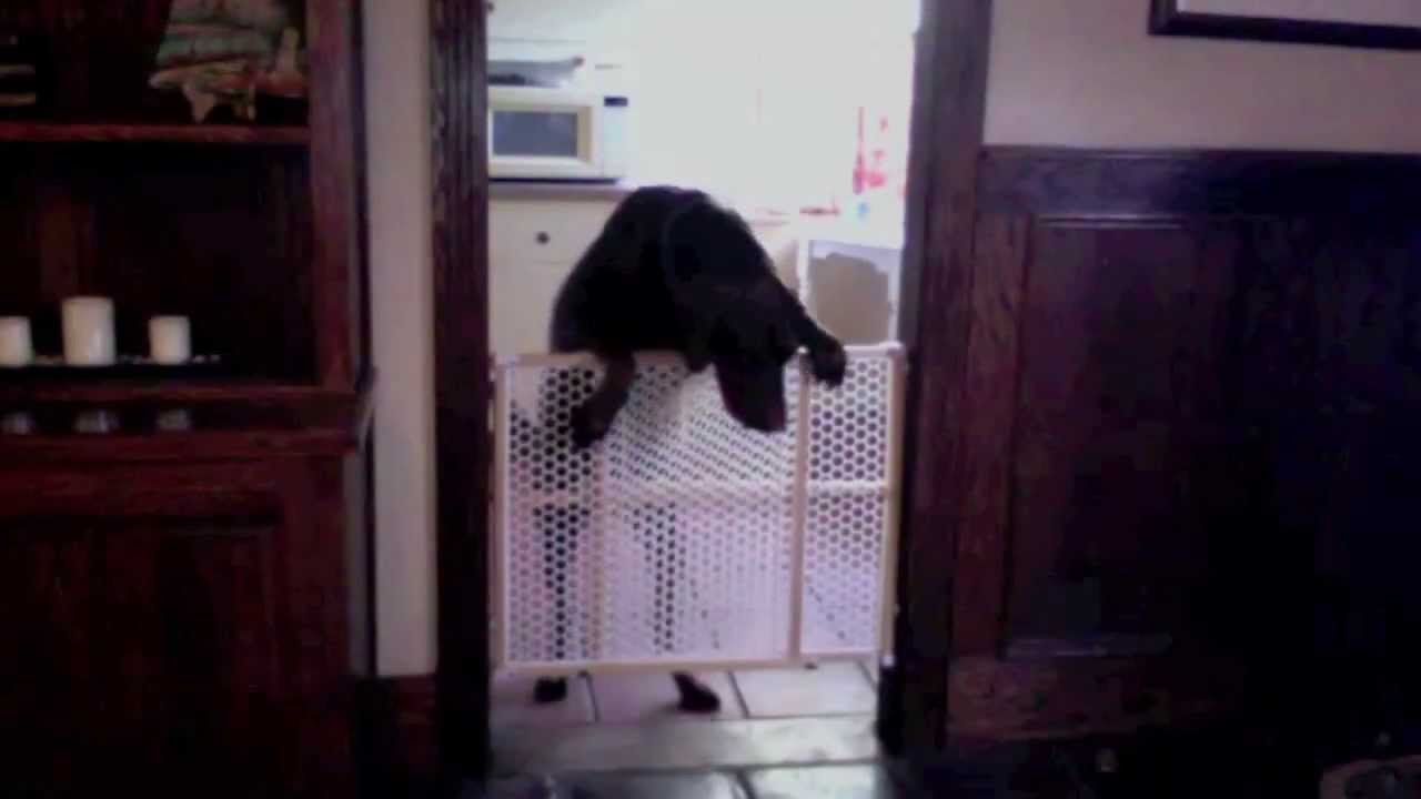Dogs Home Alone Lol
