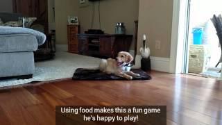Puppy training Port Orange FL: Starting stay