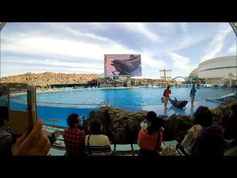 Port of Nagoya Public Aquarium Dolphin Show