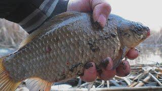 Рыбалка Караси на поплавочную удочку My fishing
