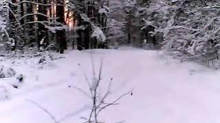 Первая охота в 2019 с русской гончей.