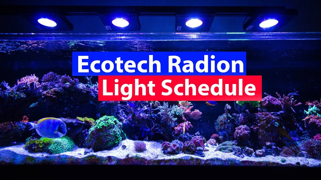 Ecotech Radion Lighting Schedule Settings and Profiles Download