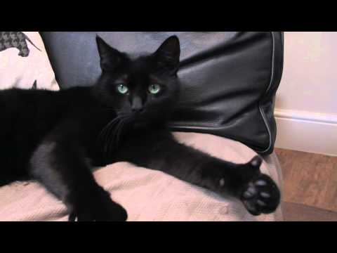 Amazing Cat Gives Thumbs Up