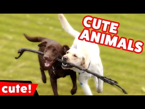Funniest Cute Pet & Animal Bloopers & Moments Weekly Compilation | Kyoot Animals