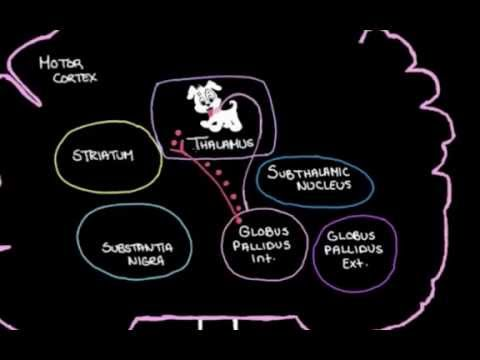 Khan Academy - The Basal Ganglia: Details of the Indirect Pathway