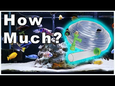 Fish Tank Water Changes 101: How Much Water Should You Change In Your Aquarium?