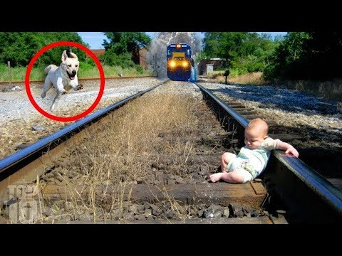 10 Unbelievable Animals Who SAVED People's Lives!