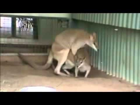 Free animals mating youtube
