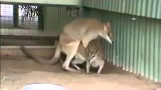 Repeat youtube video random animals mating youtube
