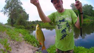 Рыбалка 30 июня ловля красноперки и плотвы на поплавок