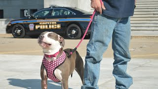 Biscuits And Bullets: Change Demanded For Police Killing Dogs