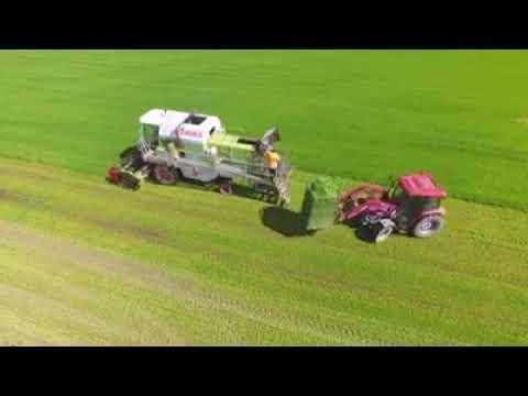 Organic Barley from New Zealand