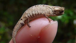 TOP 15 smallest ANIMALS IN THE WORLD