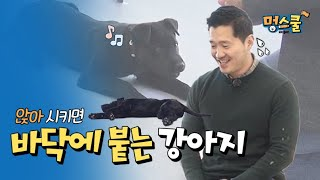 a dog who lies down when to sit down │Kang hyung wook's Mung school with beginner owner