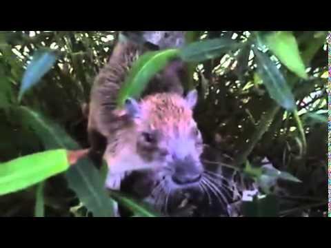 Footage of a wild Guantanamo Bay, Cuba...