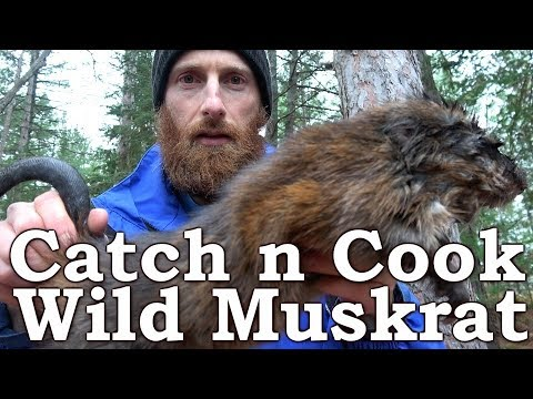 Catch n Cook Wild Muskrat | SURPRISE BEST MEAT EVER with CHARCUTERIE?!? | Open Fire & Pumpkin Pie