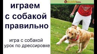Правила игры  с собакой.  Как правильно  играть с собакой? Игра  с собакой - урок по дрессировке