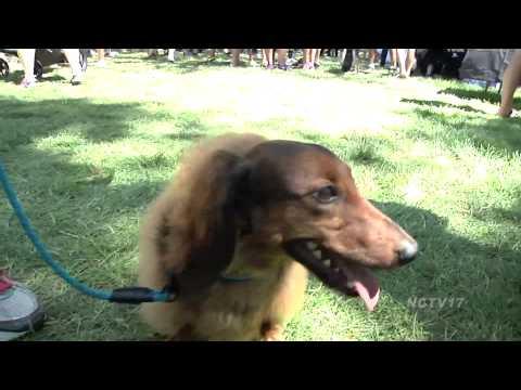 Dog Days at Cantigny