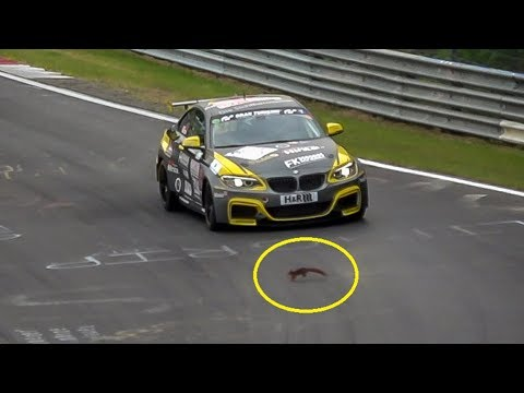 Luckiest Squirrel of the Nürburgring Nordschleife!