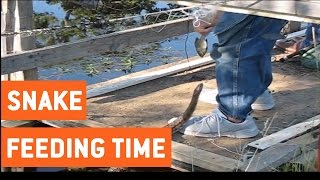 Man Hand Feeds Water Snake | Feeding Time