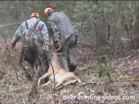 Deer Hunting Dogs Hunting With Dogs Youtube
