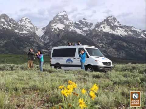 WEBINAR | Summer Adventures in Yellowstone