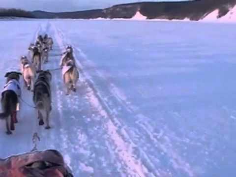 "Iditarod 2012: ""Aliy Cam"" Yukon River Part Two"