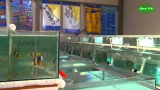 видео Рыба-клоун. Аквариумное содержание
