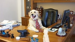 Why We Should Bring Our Dogs To Work
