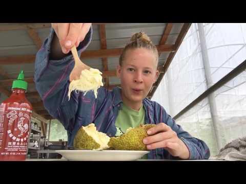 Mini Hawaiian Breadfruit MUKBANG