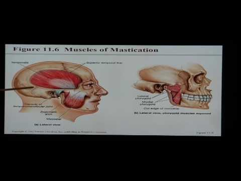 Anatomy and Physiology Help: Chapter 11 Muscular System - YouTube