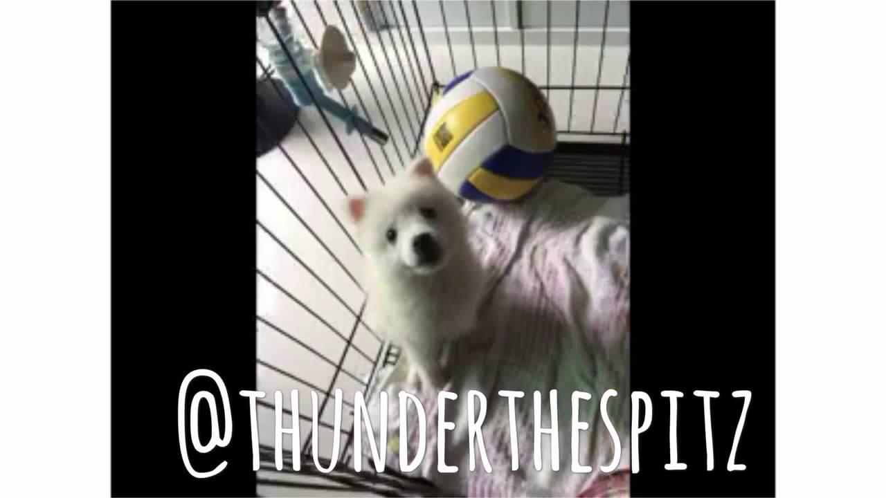 Puppyhood YouTube - 26 dogs puppyhood photos