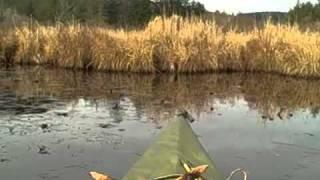 Primitive Archery Duck Hunt