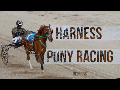 DHPC Harness Pony Racing, January 28 2018