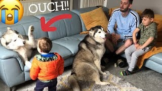 Husky Gets Over Excited And Smacks Baby In Face But Makes Everything Okay Again!! [READ DESCRIPTION]