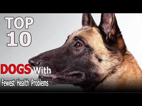Top 10 Dog Breeds With The Fewest Health Problems | Top 10 animals