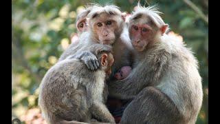 Смешные обезьяны. Прикольные обезьяны. Animals & fish.(Смешные обезьяны. Прикольные обезьяны. ПРИКОЛЫ С ЖИВОТНЫМИ на КАНАЛЕ. смешные обезьяны, смешные обезьяны..., 2015-07-24T13:15:31.000Z)