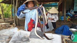 Cảnh tượng lạ đàn rắn cuộn tròn quấn lấy nhau không chịu rời đi khi được trả tự do