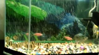 LED освещение аквариума(цветное).(Яркую,красочную подсветку любого аквариума изготавливаю сам., 2016-03-06T13:45:40.000Z)
