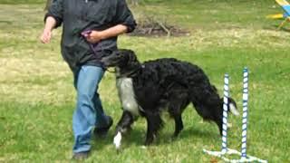 Obedience training Borzoi Keeper