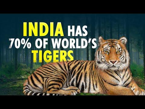 Global Tiger Day: India has 70% of World's Tiger Population   Prakash Javadekar   Tiger Census   DNA