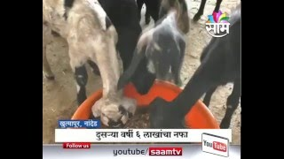 8 lakhs Profit Earned by Goat farming in Nanded