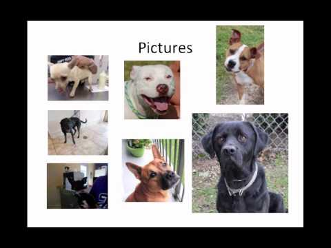 Achieving And Sustaining No-kill In A Medium-sized, Open Admission Shelter - Conference Recording