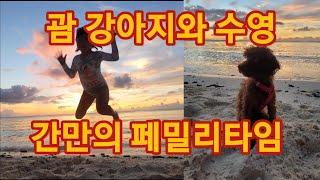 괌 강아지와 수영 페밀리타임